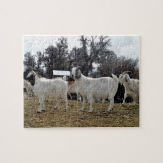 3 cabras puzzle con fotos