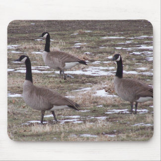 3 canada geese mouse pad
