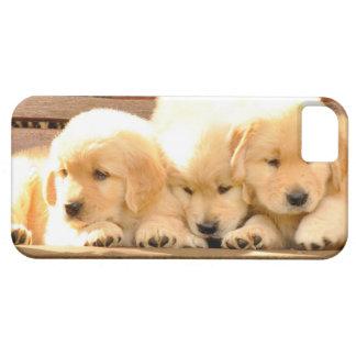 3 caso del iPhone 5 de los perritos iPhone 5 Carcasas