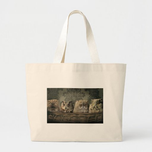 3 Cats and a Owl in a Basket Bag