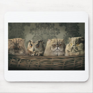 3 Cats and a Owl in a Basket Mouse Pad