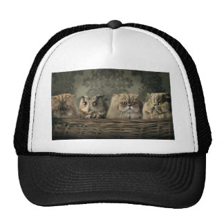 3 Cats and a Owl in a Basket Trucker Hat