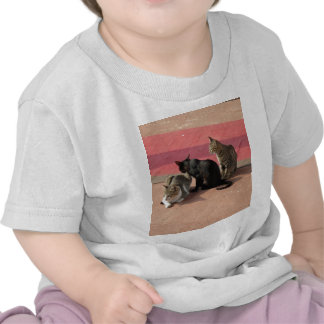 3 Cats looking pensive Shirt