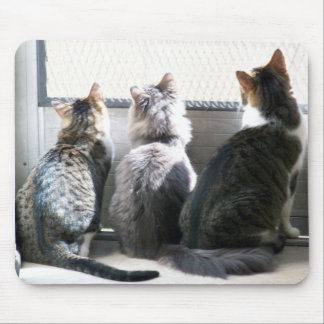 3 cats mouse pad