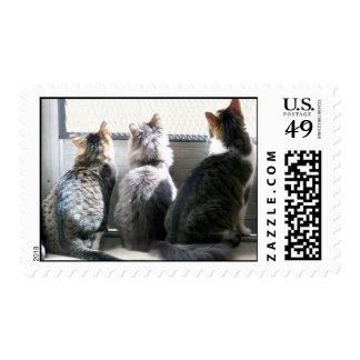 3 cats postage
