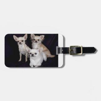 3 chihuahuas.png bag tag