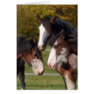3 Clydesdale heads Cards