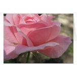 3 color de rosa rosados tarjeton