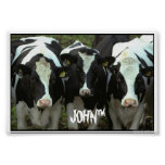 3 cow poster