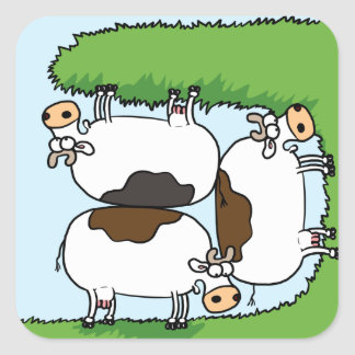 3 Cows grazing Square Sticker