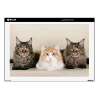 """3 Cute Kittens Decal For 17"""" Laptop"""
