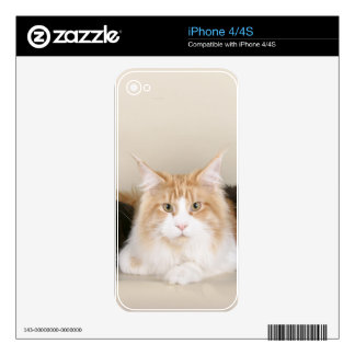 3 Cute Kittens Decal For iPhone 4