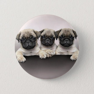 3 Cute Pug Pippies Pinback Button