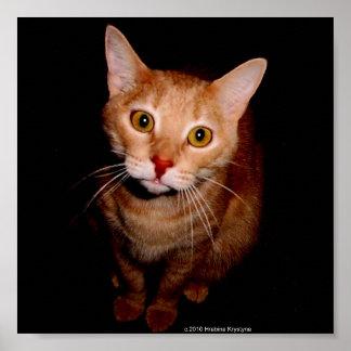 3-D ABYSSINIAN CAT PRINT