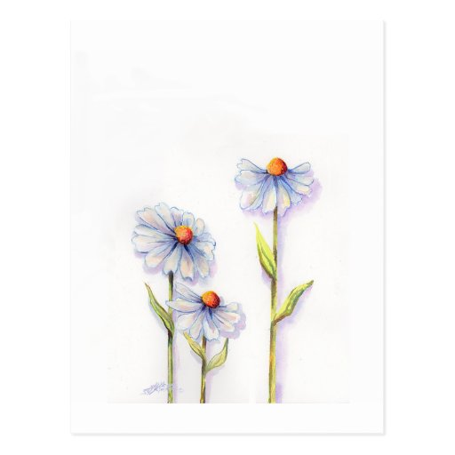 3 DAISIES by SHARON SHARPE Postcards