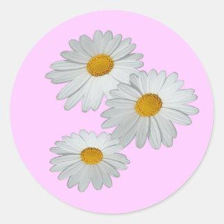 3 Daisies Sticker