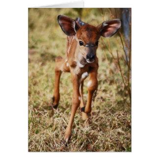 3 day old baby Nyala deer Cards