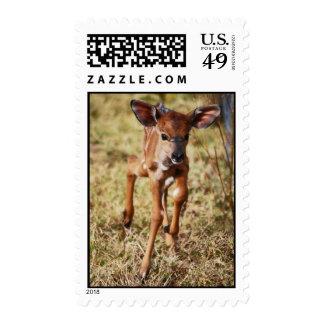 3 day old baby Nyala deer Stamp