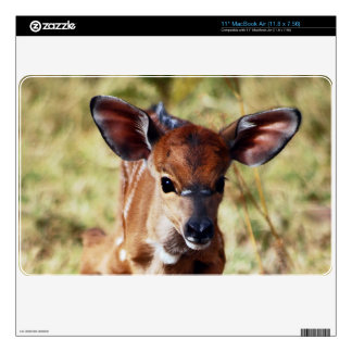 3 day old baby Nyala deer Decals For The MacBook