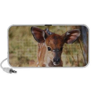 3 day old baby Nyala deer iPhone Speakers
