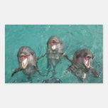 3 delfínes pegatina rectangular