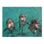 3 delfínes que sonríen en el océano postal