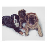 3 Dogs Canvas Print