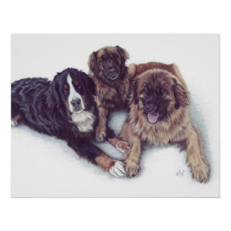3 Dogs Canvas Print