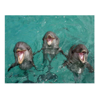 3 Dolphins smiling in the ocean Postcard