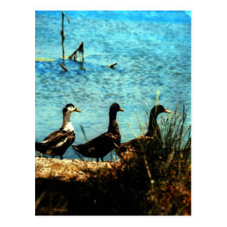 3 Ducks Stavros Crete Photo Colette Guggenheim Postcard