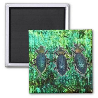 3 escarabajos iridiscentes iman para frigorífico