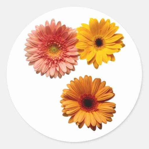 3 flores pegatina redonda