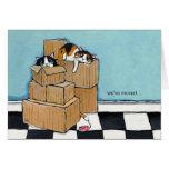 3 gatos y cajas el   hemos movido la tarjeta de no