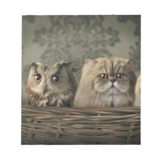 3 gatos y un búho en una cesta bloc