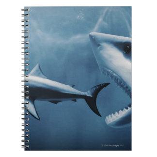 3 grandes tiburones blancos (carcharias del Carcha Libretas Espirales
