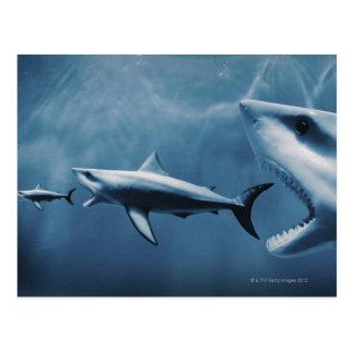 3 grandes tiburones blancos (carcharias del postal