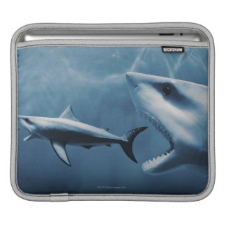 3 Great white sharks (Carcharodon carcharias) iPad Sleeve