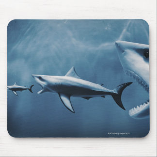 3 Great white sharks (Carcharodon carcharias) Mouse Pad