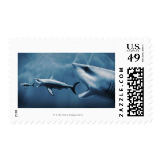 3 Great white sharks (Carcharodon carcharias) Postage