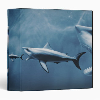 3 Great white sharks (Carcharodon carcharias) Vinyl Binders