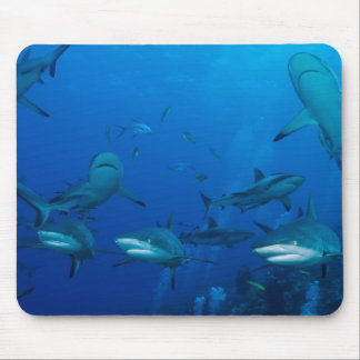 3 Grey Reef Sharks at Osprey Reef Mousepad