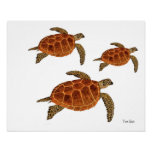 3 Hawksbill Turtles Poster