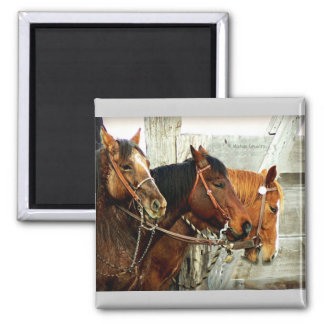 3 Horse Heads Magnet