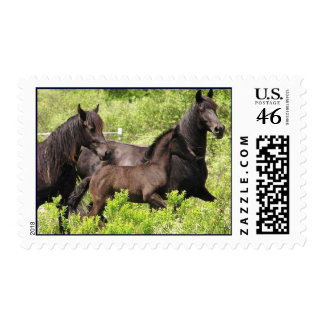 3 horses postage stamps 1