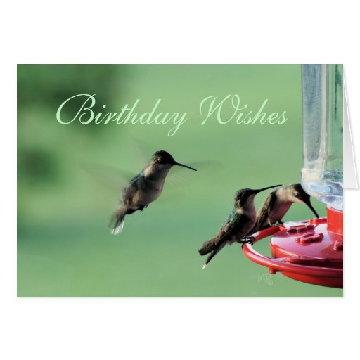 3 Hummingbirds at feeder- customize any occasion Greeting Cards