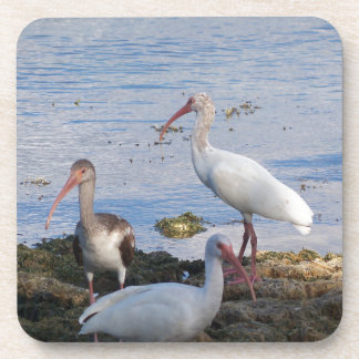 3 Ibis on the shore of Florida Bay Beverage Coaster