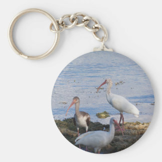 3 Ibis on the shore of Florida Bay Keychain