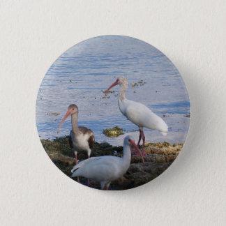 3 Ibis on the shore of Florida Bay Pinback Button