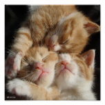 3 Kittens Print