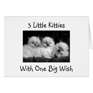 3 KITTIES WITH ONE BIG WISH-HAPPY 1st BIRTHDAY Card